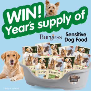 B&M's BIG Giveaway - Winner of a Year's Supply of Burgess Dog Food