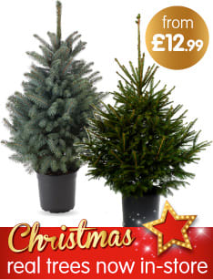 Save on Christmas Trees at B&M.