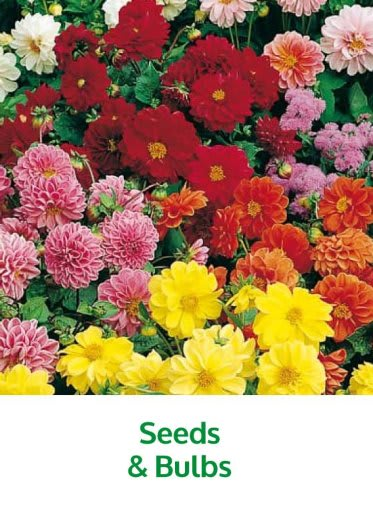 Save on Garden Seeds and bulbs at B&M.