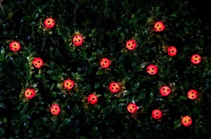 318694-20-Nature-String-Solar-Lights---Ladybird 1