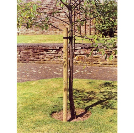 265774-6ft-Tree-Pole