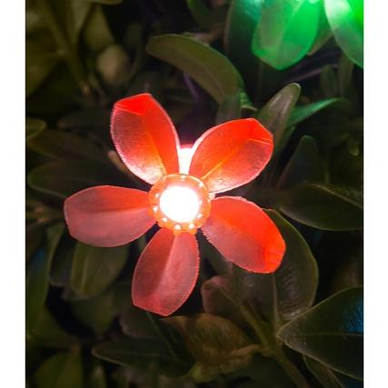 342026-flower-close-up1