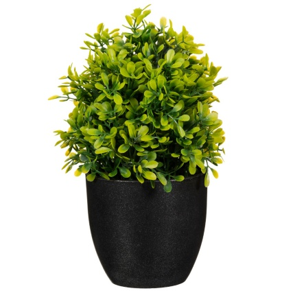 297350-Potted-Plant-20cm-21