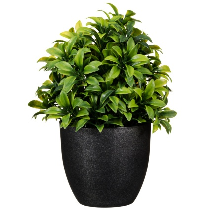 297350-Potted-Plant-20cm-31