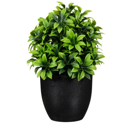 297350-Potted-Plant-20cm-41