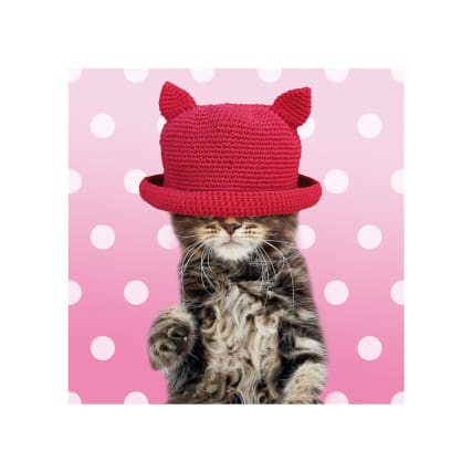 301168-Photographic-Cat-In-A-Hat