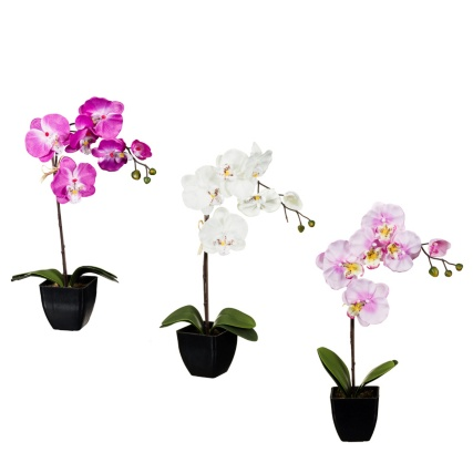 306374-45cm-Orchid-In-Pot-main1