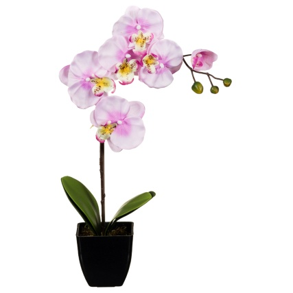 306374-45cm-Orchid-In-Pot-pink1