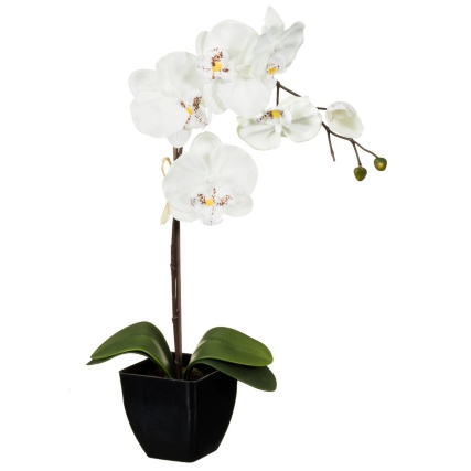 306374-45cm-Orchid-In-Pot-white1