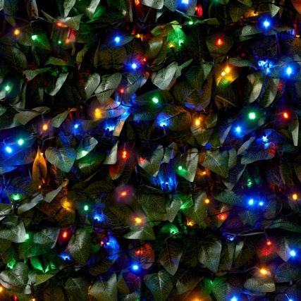 306732-306884-306888--Solar-powered-LED-coloured-string-lights-hedge