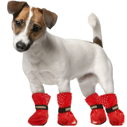 Doggy Wellies