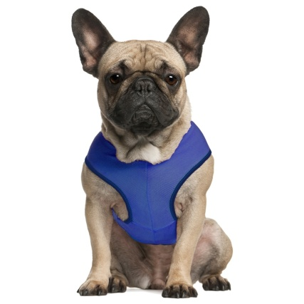 333873-chilli-paws-pet-cooling-vest-small-blue-4