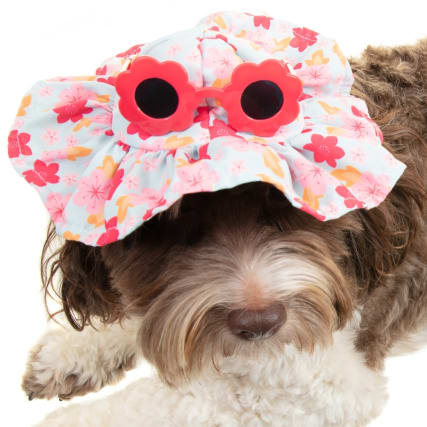 334266-summer-dog-hat-flowers-3