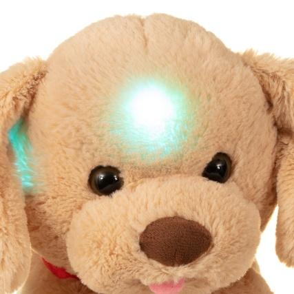 347709-night-time-glow-puppy-2.jpg