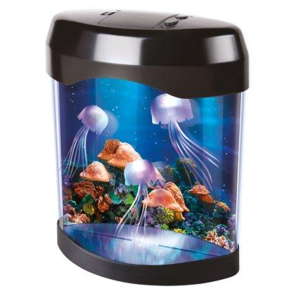 348743-jellyfish-tank.jpg