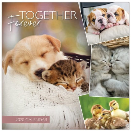 349138-2020-calendar-and-diary-pets-3.jpg