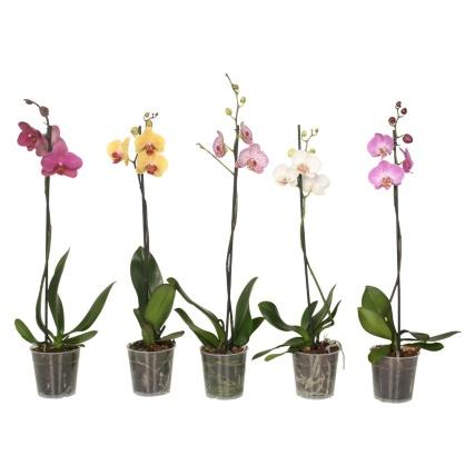 351504-orchid.jpg