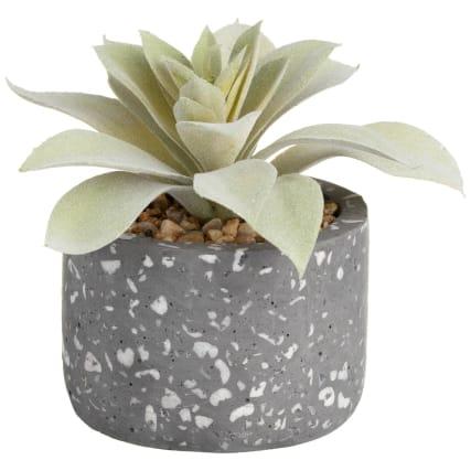351704-succulent-in-terazzo-pot-grey.jpg
