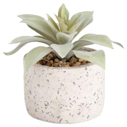 351704-succulent-in-terazzo-pot-white.jpg