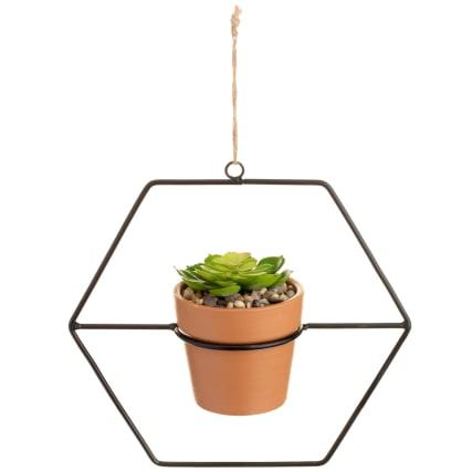 351725-hanging-succulent-2.jpg