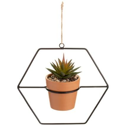 351725-hanging-succulent-4.jpg