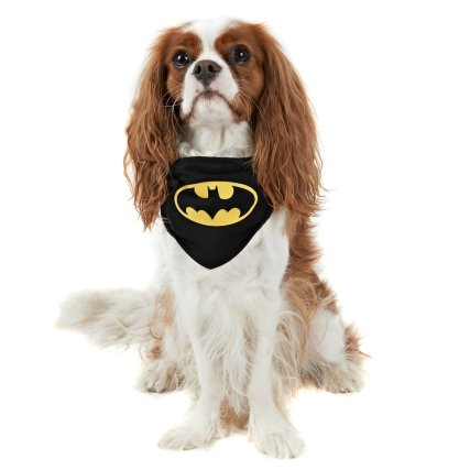 352234-dog-neck-batman.jpg