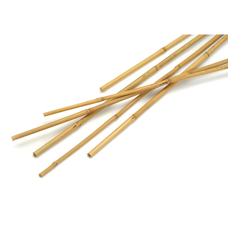 B m bamboo canes ft pk