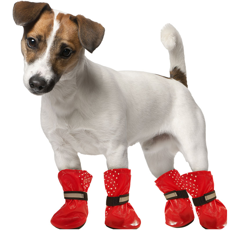 Doggy Wellies Pets Dog Accessories Amp Clothing B Amp M
