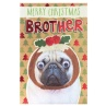 317356-brother-pug-in-pudding1