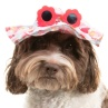 334266-summer-dog-hat-flowers