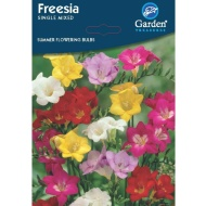 Summer Flowering Bulbs & Perennials - Freesia Seeds