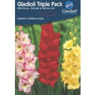 Summer Flowering Bulbs & Perennials - Gladioli Seeds