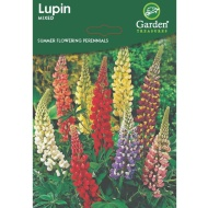 Summer Flowering Bulbs & Perennials - Lupin Seeds