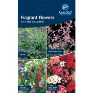 Flower Seeds - Fragrant Flowers