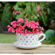 Polka Dot Teacup and Saucer Planter