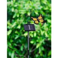 Solar Flutterling Butterfly