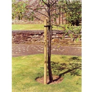 Tree Pole 8ft