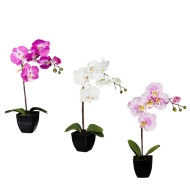 Orchid in Pot 45cm
