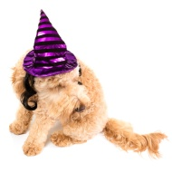 Halloween Pet Witches Hat