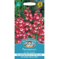 Penstemon Scarlet Queen Seeds