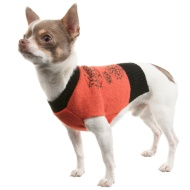 Dogs Halloween Jumper - X-Small/Small - Cobwebs