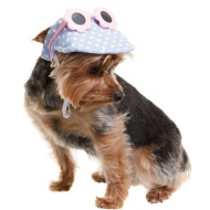 Summer Dog Hats - Spotty Visor & Sunglasses