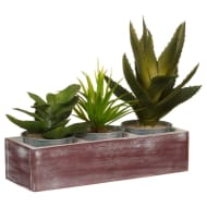 Succulents in Tray 3pk