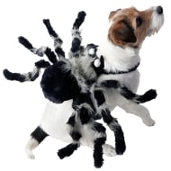 Halloween Dog Costume - Medium-X Large - Spider