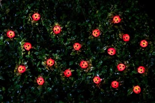 30 Insect Solar String Lights - Ladybird