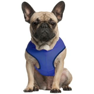 Pet Cooling Vest - Blue