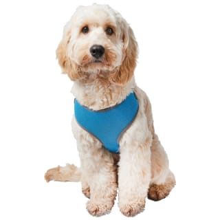 Pet Cooling Harness - Blue