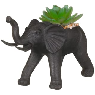 Succulent Plant in Elephant