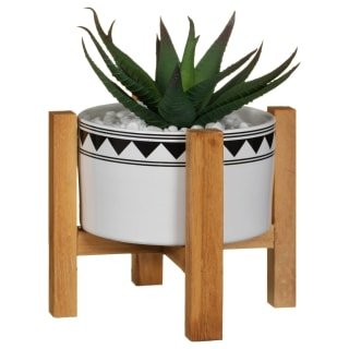 Succulent Plant in Wooden Pot