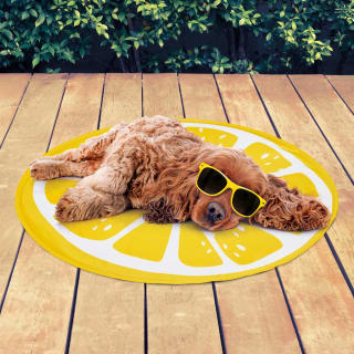 Pet Cooling Fruit Mat - Lemon